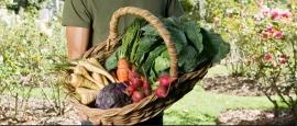 cultivar-huerto-casa-ecohortum